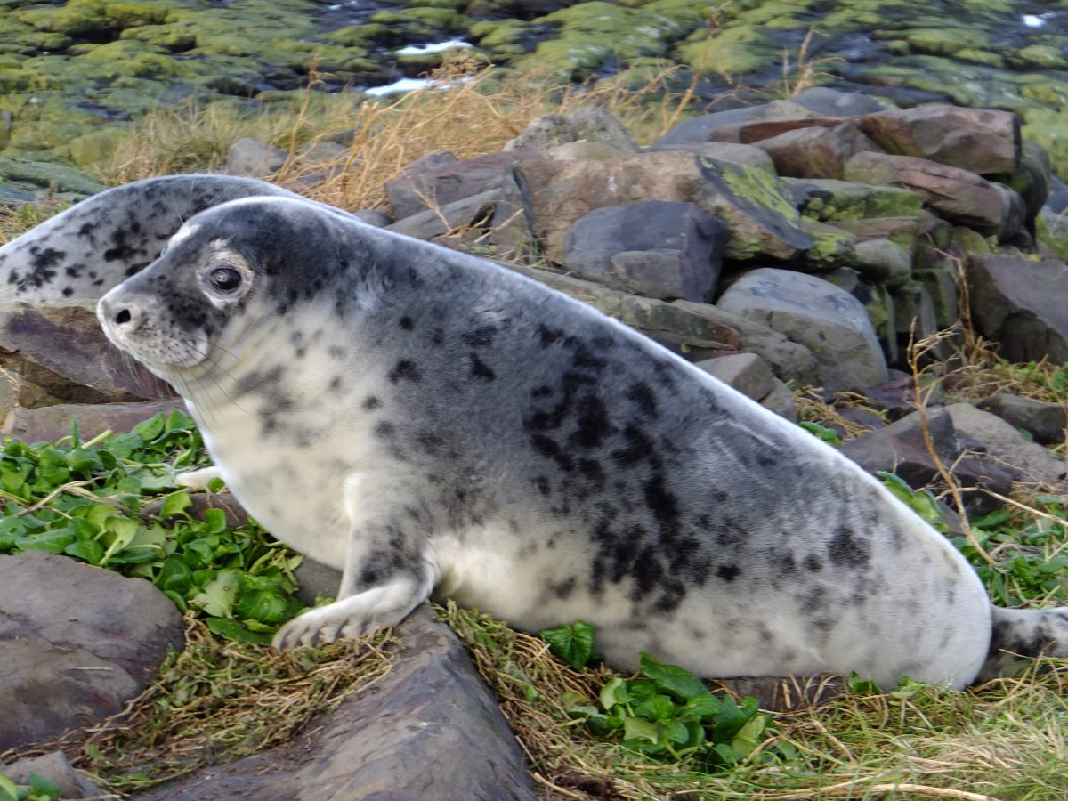 Of Singing Seals and Drones